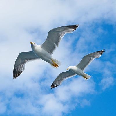 bird prevention management services
